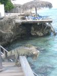 Bonaire May10 046