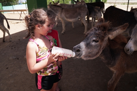 kids_feeding_donkey